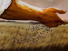 В 2013 году засеют больше полей, чем в 2012