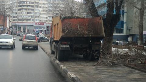 Чиновники: в Волжском районе незаконно обрезали деревья