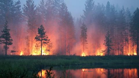 В России могут ввести паспорта территорий, подверженных лесным пожарам