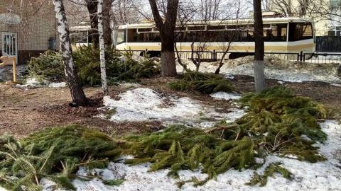 Под тающим снегом обнаружились остатки елочного базара