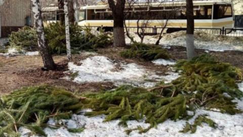 Чиновники вынесли елки после публикации Saratovnews