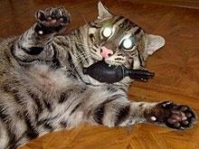 Набитая взрывчаткой кошка и снайпер из Саратова не смогли убить московского коммерсанта