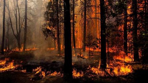 В Саратовской области начинается сезон лесных пожаров
