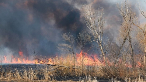 Крупный пожар обезобразил берег реки Курдюм