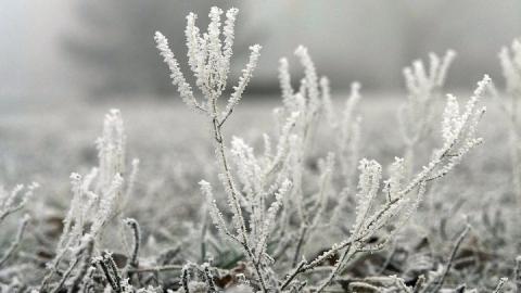 Ночные заморозки не покидают Саратовскую область