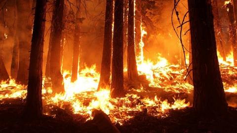 Десятки природных пожаров зафиксировали в Саратовской области