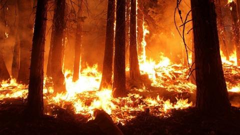 Лесные пожары распространяются по Саратовской области