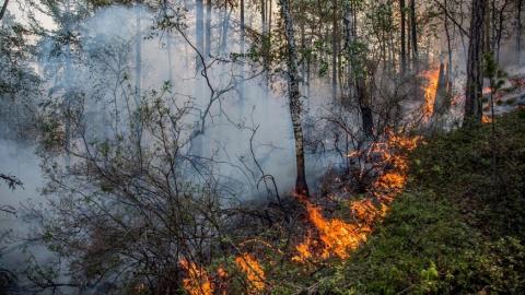 В Саратовском районе сгорели 10 гектаров леса