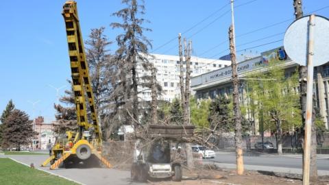 На Театральной площади Саратова спиливают 19 огромных елей