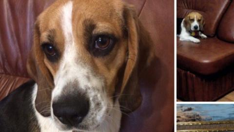 Мужчина, потребовавший вознаграждение за найденную собаку, стал антигероем соцсетей