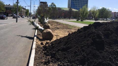 На Театральной площади начали сажать новые елочки