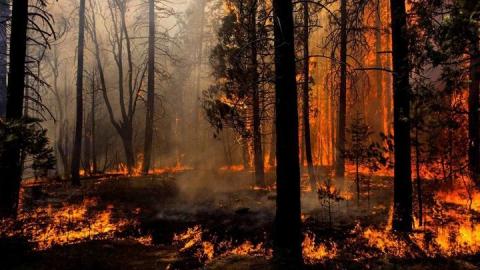 В Саратовской области установилась высокая пожарная опасность