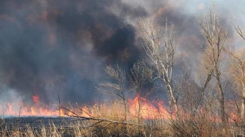 Спасатели напомнили о запрете жечь костры в лесу