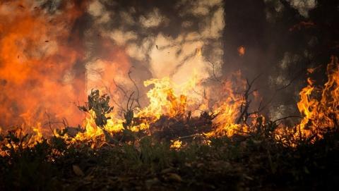 На Кумысной поляне сгорело четыре гектара 10-летнего сосняка