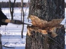 """Суд запретил """"Магниту"""" вырубать деревья ради нового магазина"""