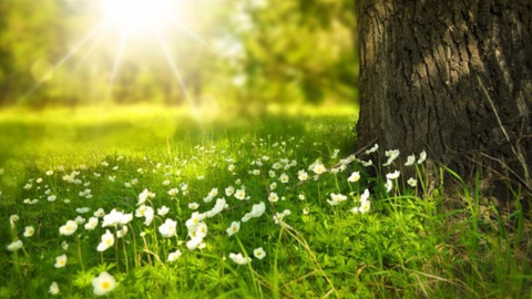 Ветер из Ирана принесет летнюю погоду в Саратовскую область