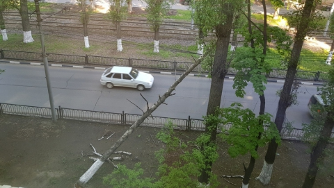 Над дорогой на проводах нависло огромное дерево