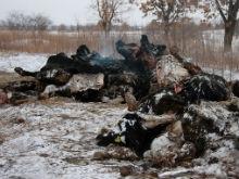 Трупы в бесхозном скотомогильнике могут стать добычей бродячих животных