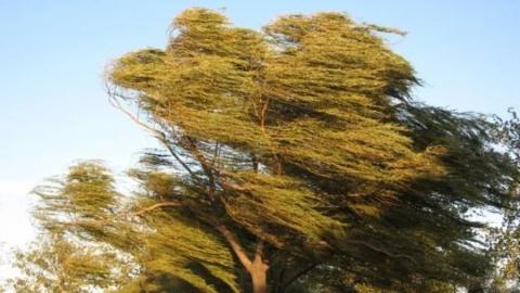 Спасатели экстренно предупредили жителей области о грозе, ливнях и шквальном ветре