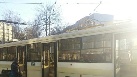 Упавшее на рельсы дерево остановило движение трамваев