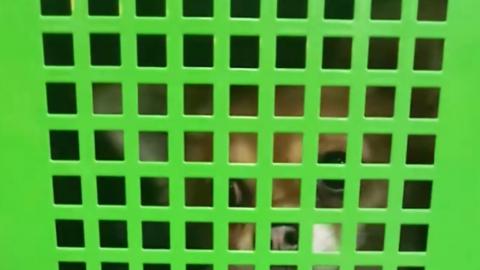 Запертый в клетке для сумок супермаркета чихуахуа вызвал невероятный холивар в соцсетях