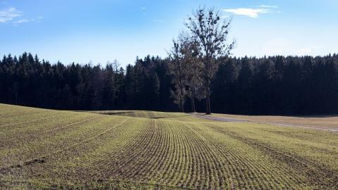 В Саратовской области введен режим чрезвычайной ситуации регионального уровня