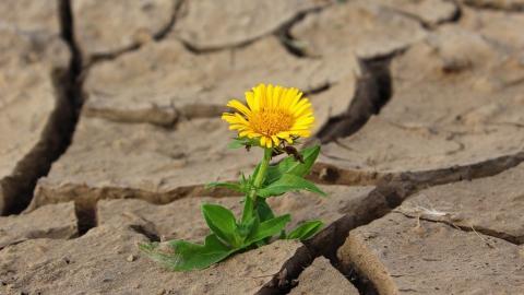 В Саратовскую область приходят жара и сушь