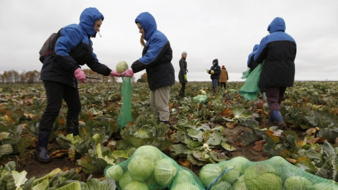 Каждый четвертый работник в Саратовской области трудится нелегально