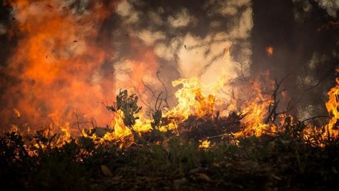 Саратовским чиновникам указали на высокий риск лесных пожаров