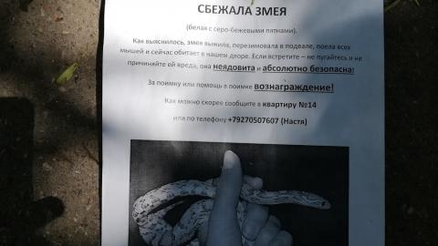 У жительницы Саратова сбежала змея