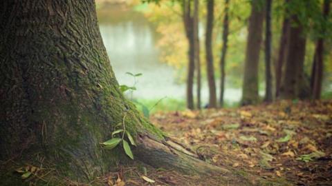 Избран новый общественный совет при министерстве природных ресурсов и экологии