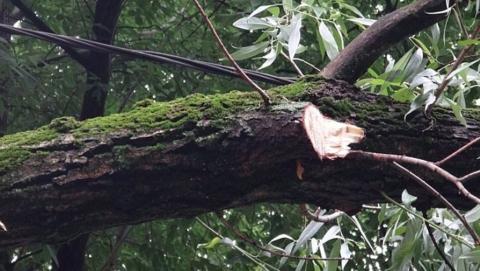 Огромный тополь упал во дворе в центре Саратова