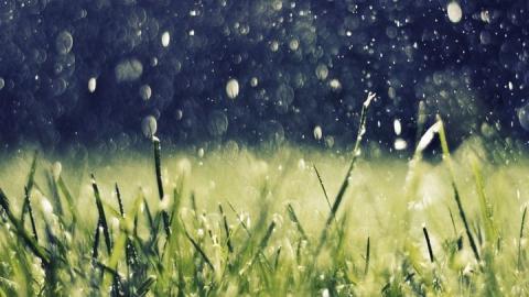 Синоптики предсказали дожди с грозами, порывистый ветер и похолодание