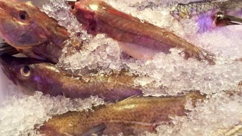 Роспотребнадзор: чаще всего некачественной оказывается плодоовощная, молочная и рыбная продукция