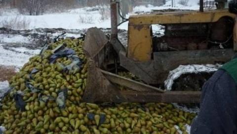 Запрет на уничтожение продуктов могут ввести в России