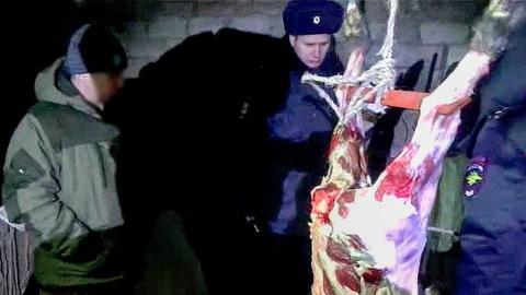 Убийство лося оценили в 100 тысяч, крота - в 100 рублей