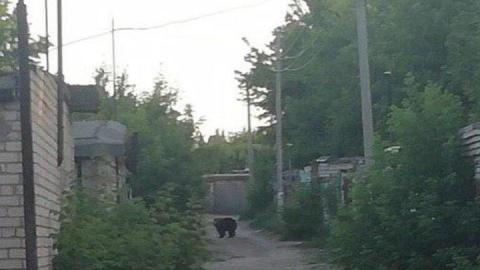 Медведицу, покусавшую двух балаковцев, полицейские заперли в вольере и охраняют