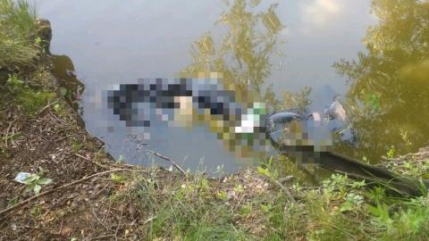 Собака, метавшаяся по берегу пруда, указала женщине на утопленника