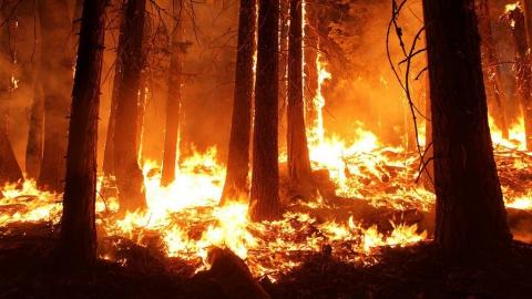 Ужесточена ответственность за лесные пожары во время чрезвычайных ситуаций