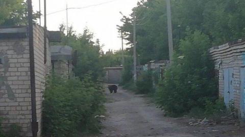 Изранившую двух мужчин медведицу продолжают держать в гараже