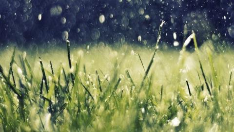 Жару в большинстве районов Саратовской области разнообразят дожди с грозами