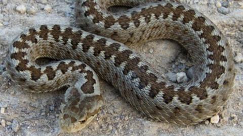 Хуторянка погибла от укуса змеи в Саратовской области