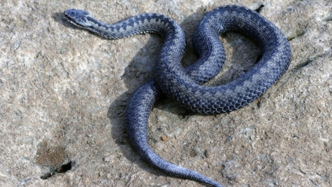 Девушка погибла от укуса змеи. Следователи начали проверку