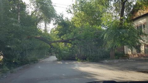 В центре Саратова на дорогу рухнула огромная ветка дерева