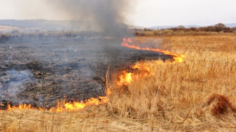 Крупный природный пожар с утра тушат в Аткарском районе