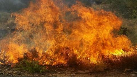 На Алтынной горе горит трава