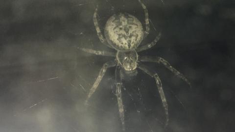 Балаковцы пугают друг друга нашествием пауков