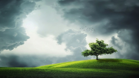 Сегодня - пасмурно, ветрено, местами дожди
