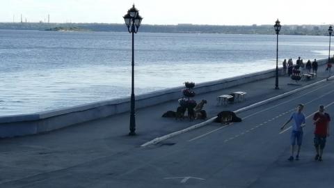 Стаи бродячих собак оккупировали набережную