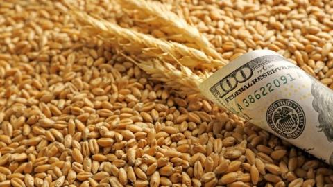 Треть саратовского аграрного экспорта составили жиры и масла